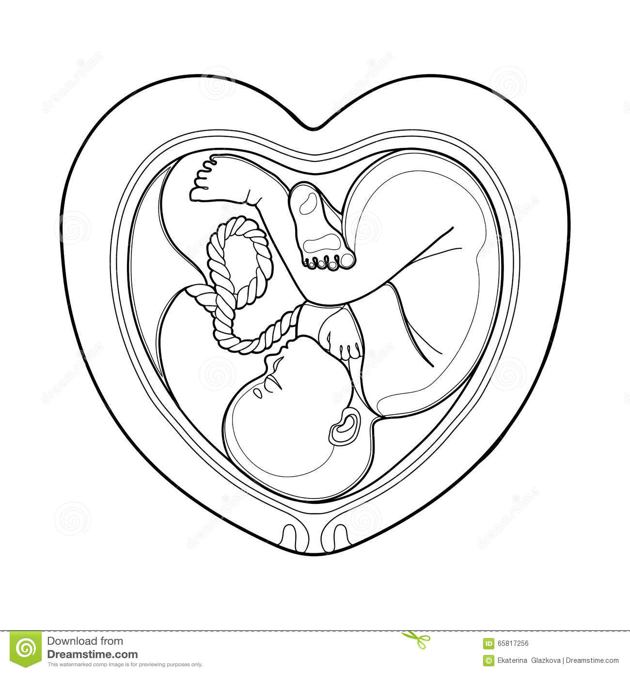 Graphic Fetus Inside The Womb Stock Vector
