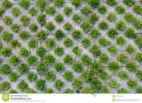 Grass and brick stock image. Image of pattern, closeup