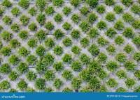 Grass and brick stock image. Image of pattern, closeup
