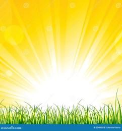 grass on the sunshine rays [ 1300 x 1390 Pixel ]
