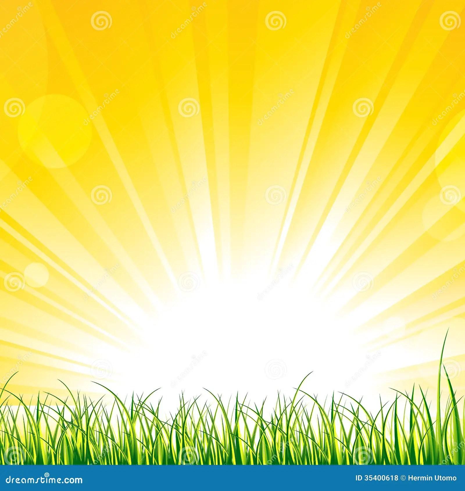 hight resolution of grass on the sunshine rays