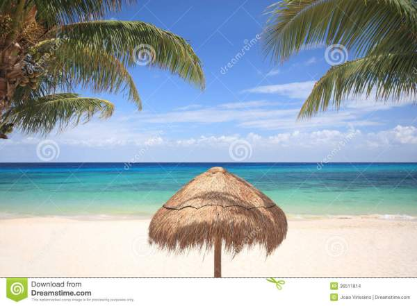 Thatched Umbrella Palm Trees Stock