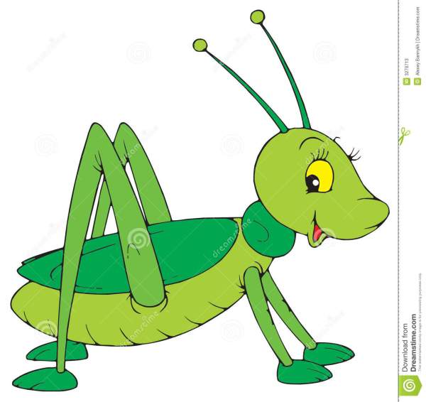 grasshopper vector clip-art stock