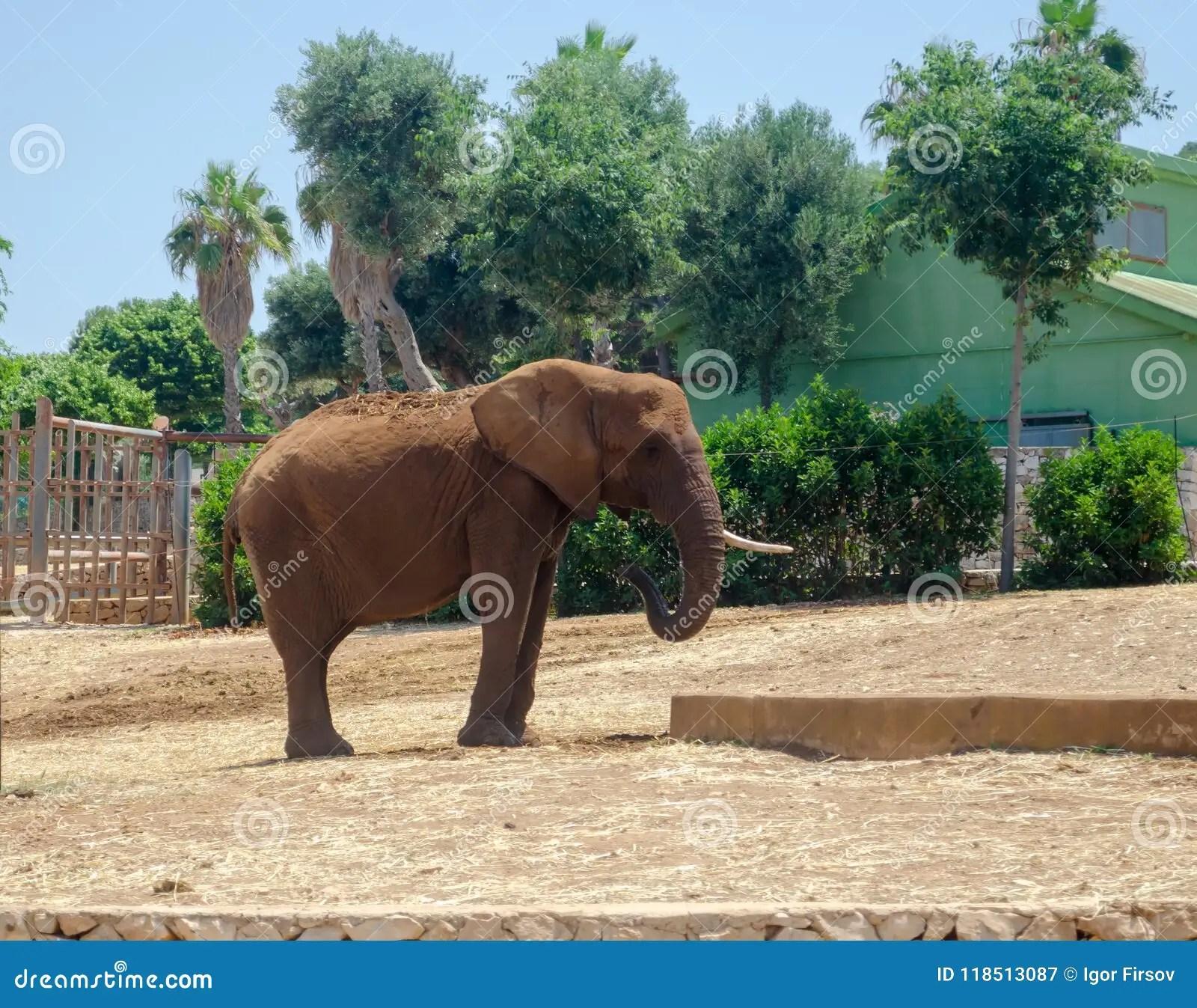Gray Elephant In Fasano Zoo Safari Park In Italia Stock Image - Image of beast. fauna: 118513087