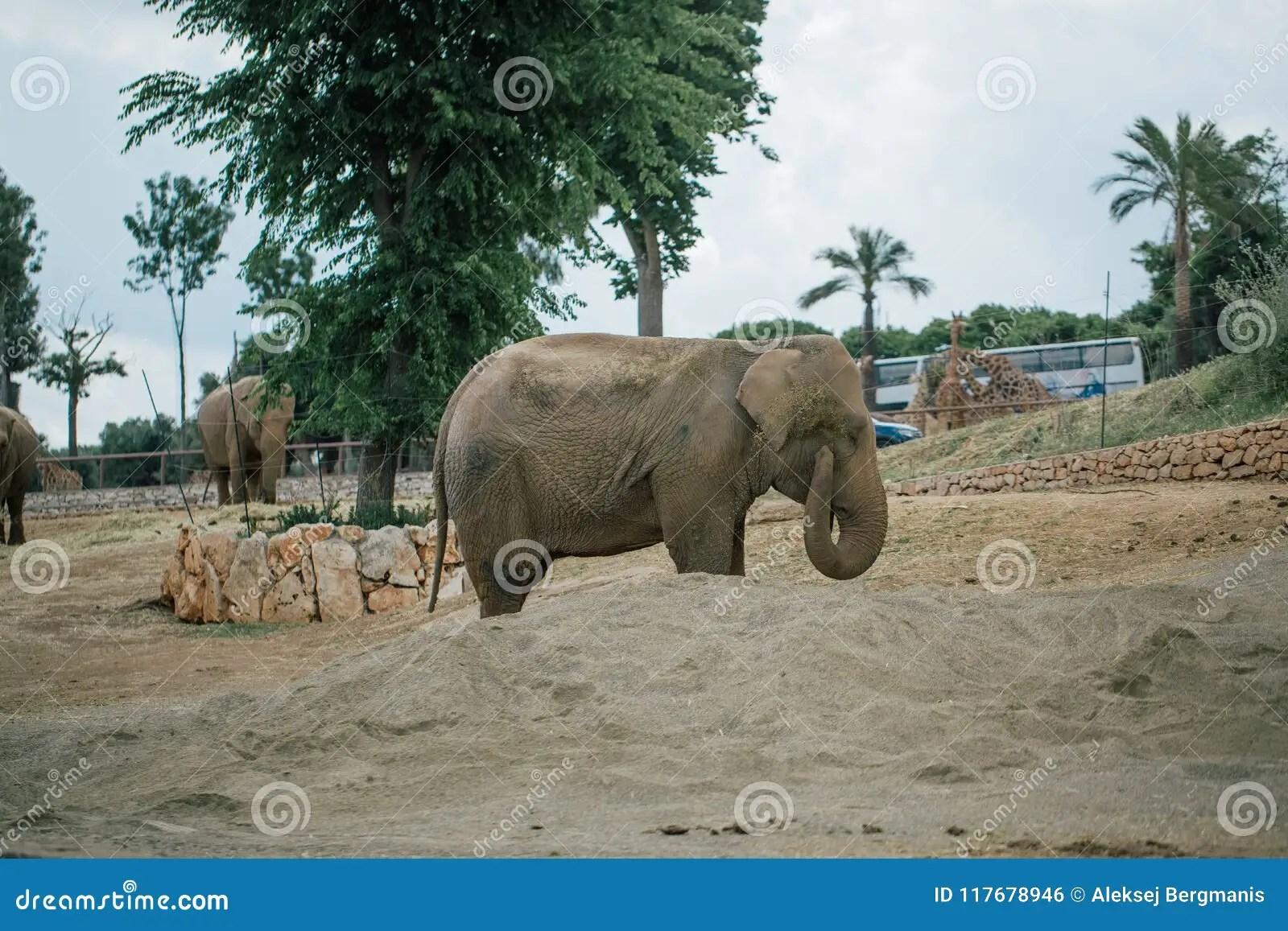 Elephant In Safari Zoo Fasano Apulia Italy Stock Photo - Image of motherprotectingbaby. animal: 117678946