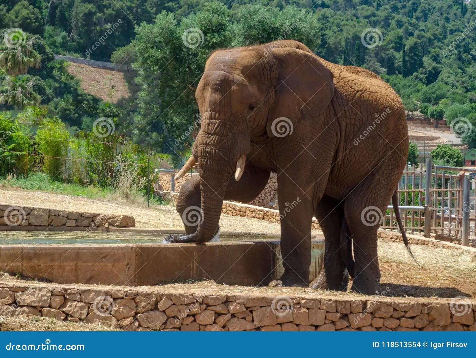 Gray Elephant In Fasano Zoo Safari Park In Italia Stock Photo - Image of elephant. african: 118513554