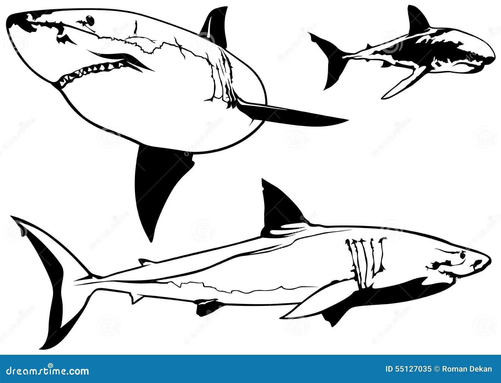Great White Shark Set Stock Vector Illustration Of Animal