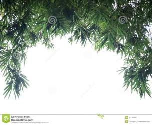border leaf bamboo background preview backdrop