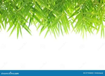 leaf bamboo background border