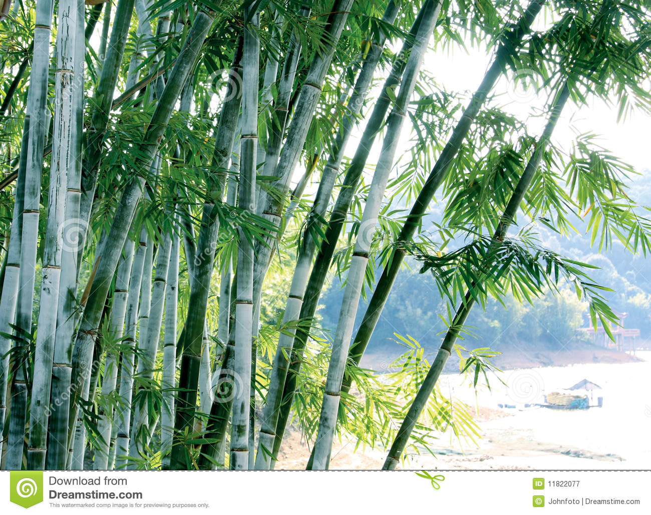 Green bamboo tree stock image Image of green nature