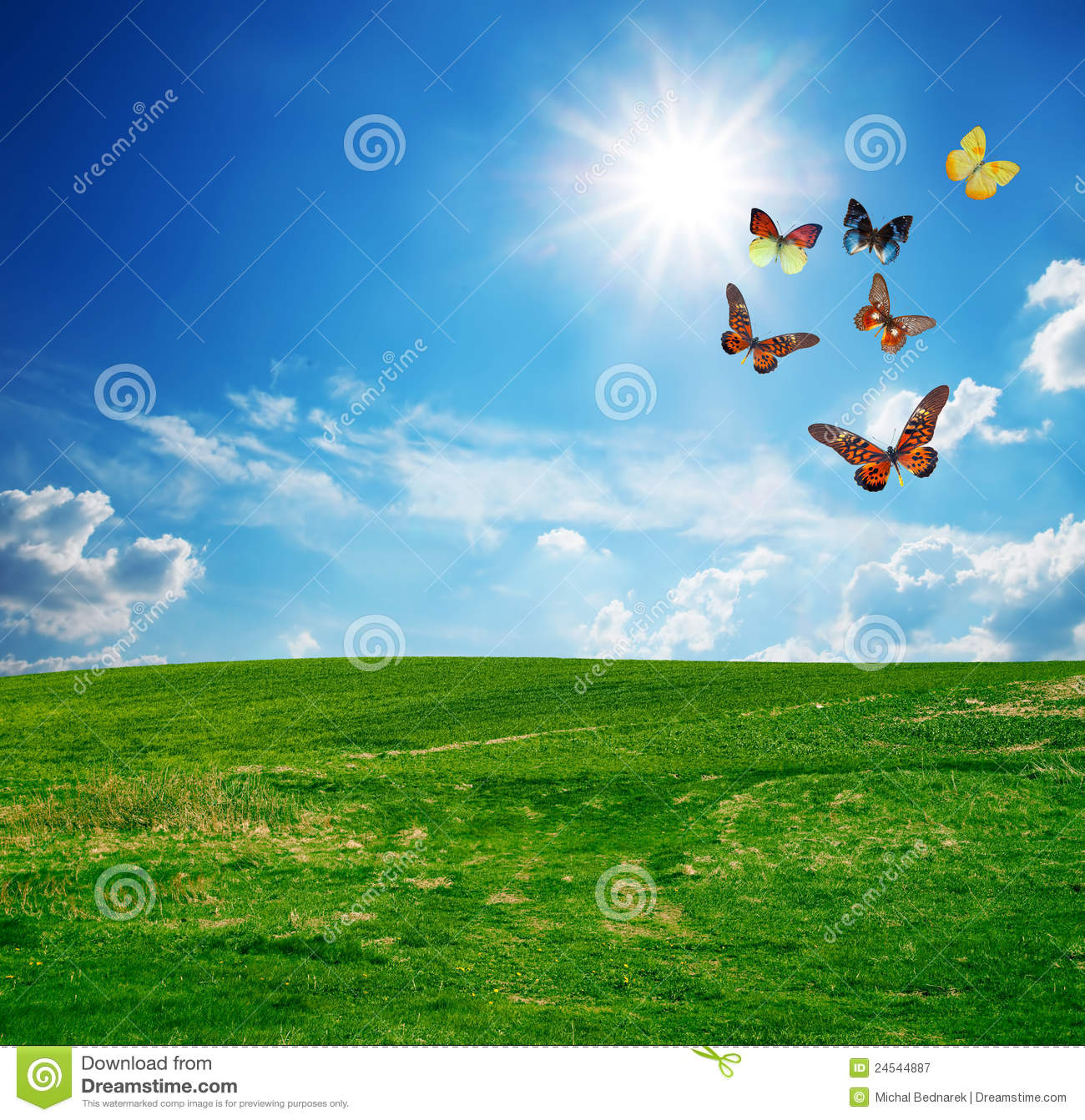 Green Field A Butterfly Group Fly Stock Image  Image