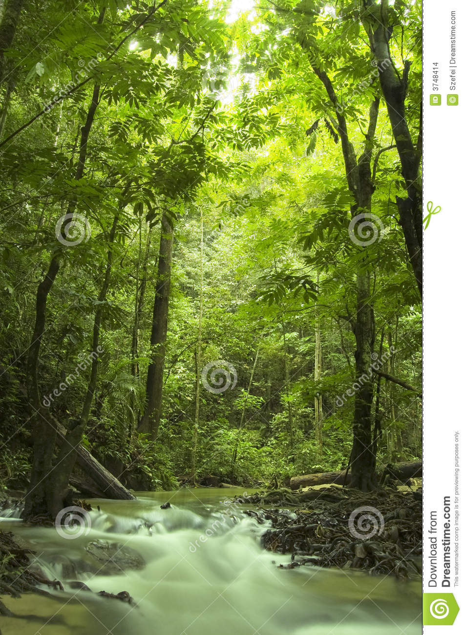 Fall Moving Wallpaper Green Forest And Stream Stock Images Image 3748414