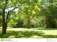 Green grass and tree stock photo. Image of texture, play ...