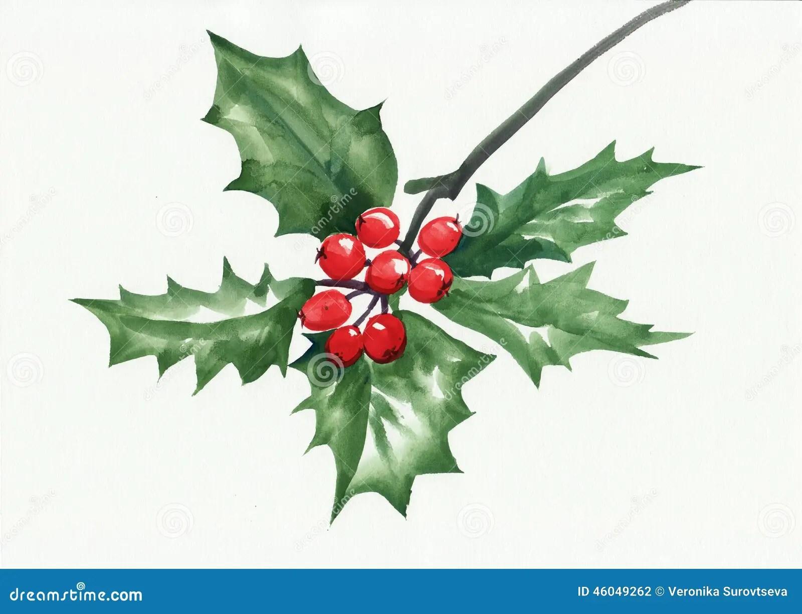 Green Holly Branch Stock Illustration Illustration Of