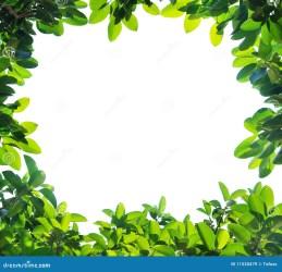 border leaf foglio blattrand