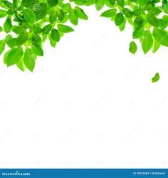 border leaf background preview