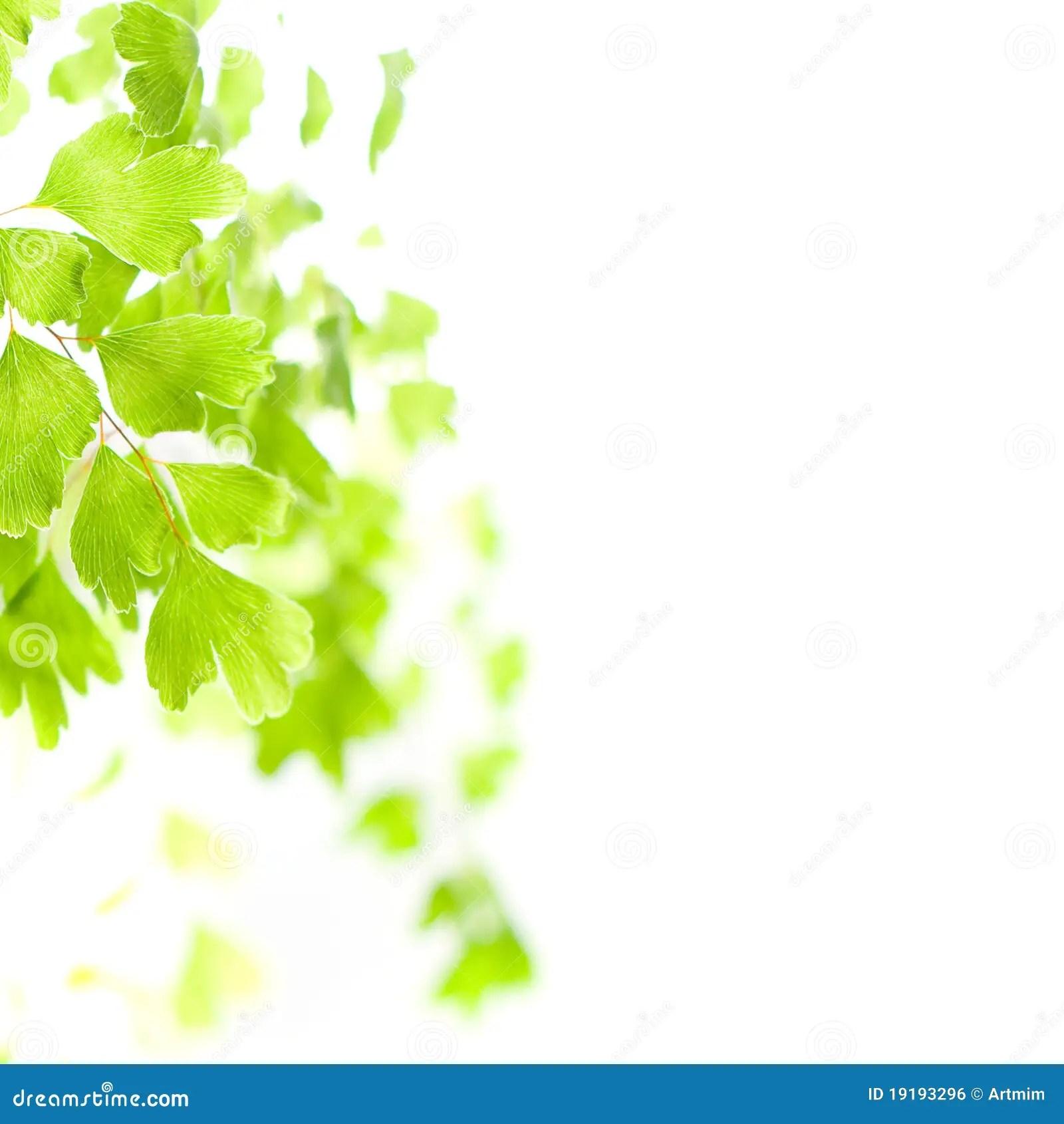 Wallpaper Border Falling Off Green Leaves In Light Stock Photo Image Of Leaf Light