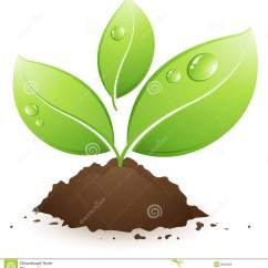 Plant Diagram Clip Art Ego C Twist Wiring Green Stock Vector Illustration Of Drop Seedling