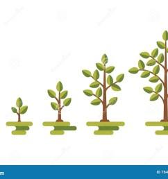 green tree growth vector diagram [ 1300 x 957 Pixel ]