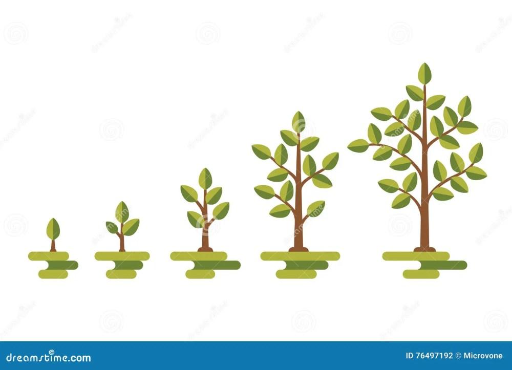 medium resolution of green tree growth vector diagram