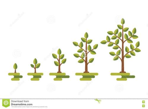 small resolution of green tree growth vector diagram
