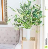 Green Tropical Houseplants Bunch In Vase Near The Couch In ...