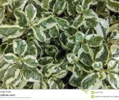 green and white foliage plants