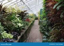 Greenhouse Plants Stock - 8468542