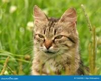 grey-cat-green-grass-12682858.jpg