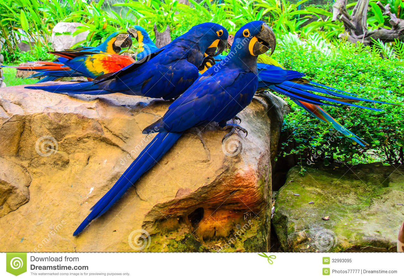Group Colorful Birds