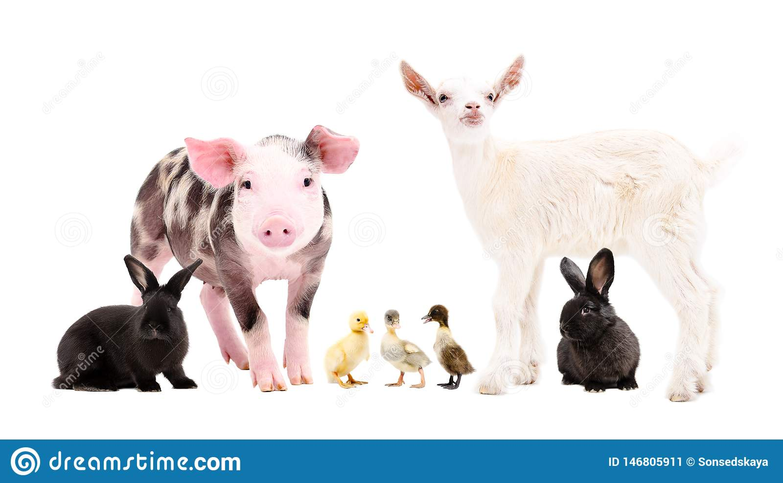 Group Of Cute Farm Animals Together Stock Image