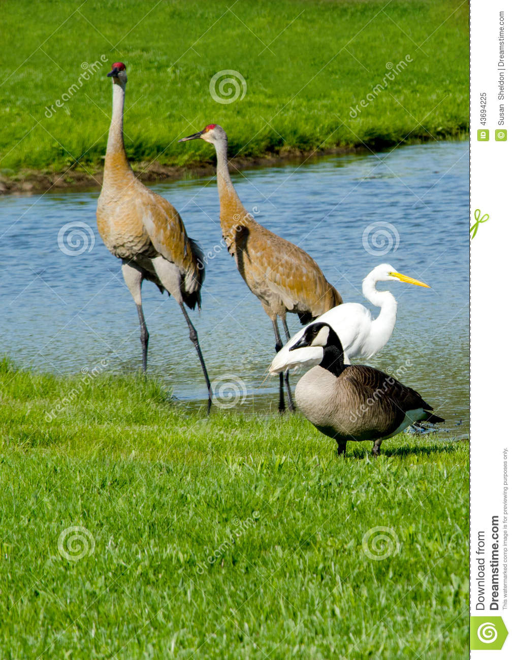 Group Of Different Birds Sharing A Pond Stock Image