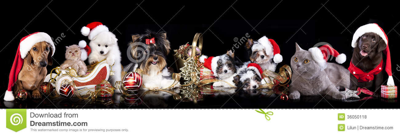 Group Dog And Cat And Kitens Wearing A Santa Hat Stock