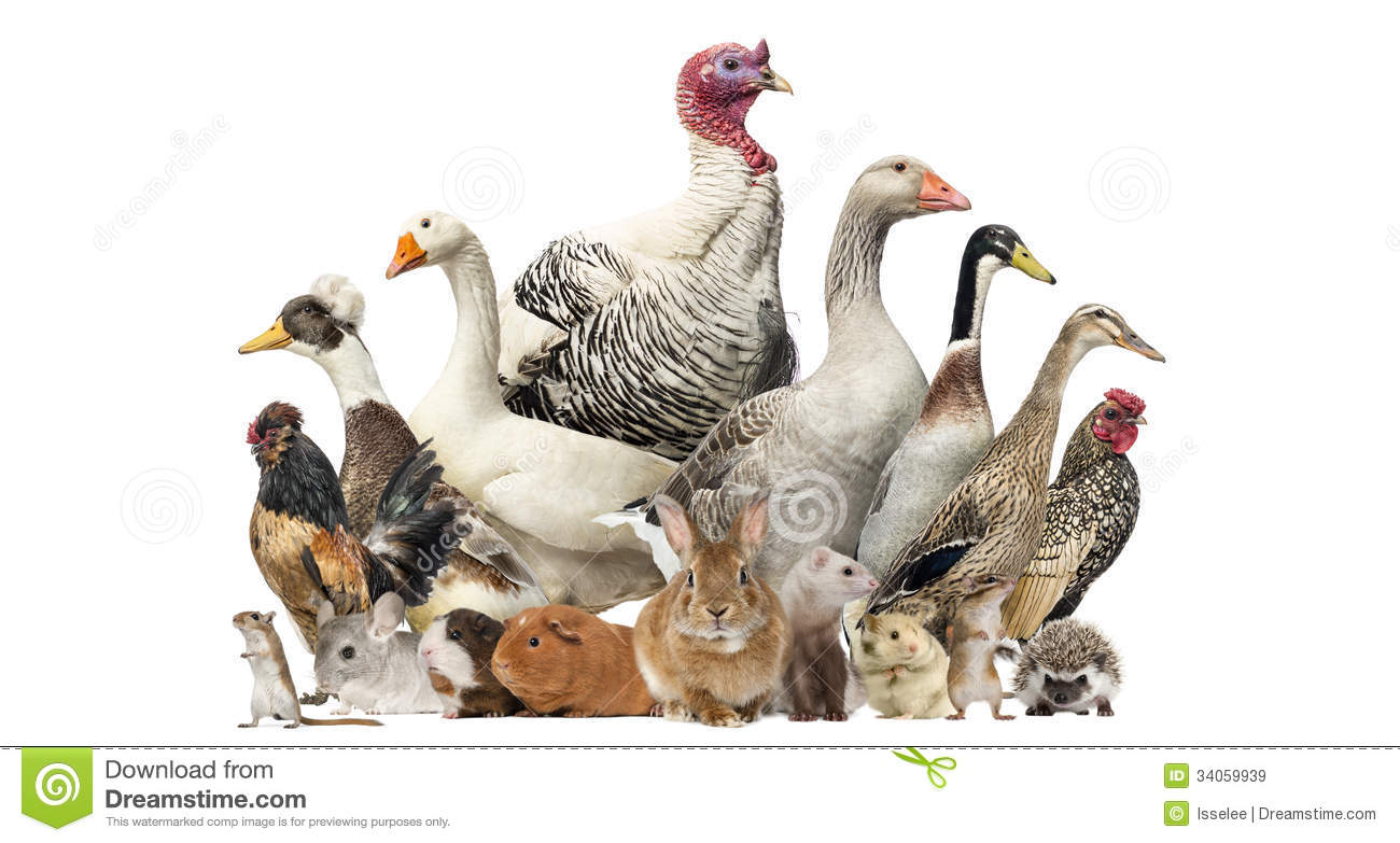 Group Of Farm Birds And Rodents Isolated Stock Image