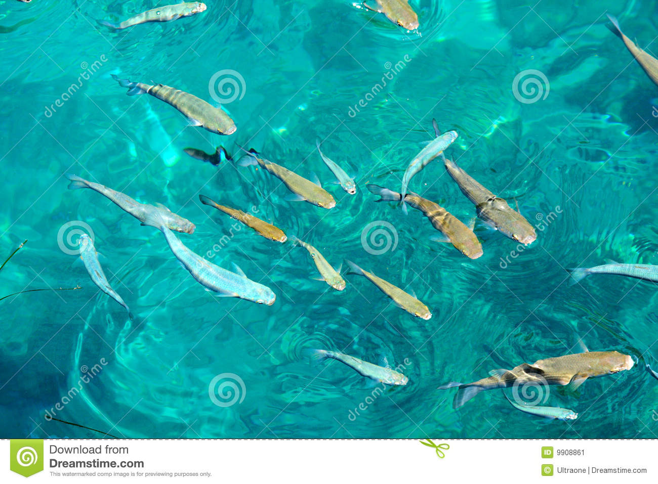 group of fish in