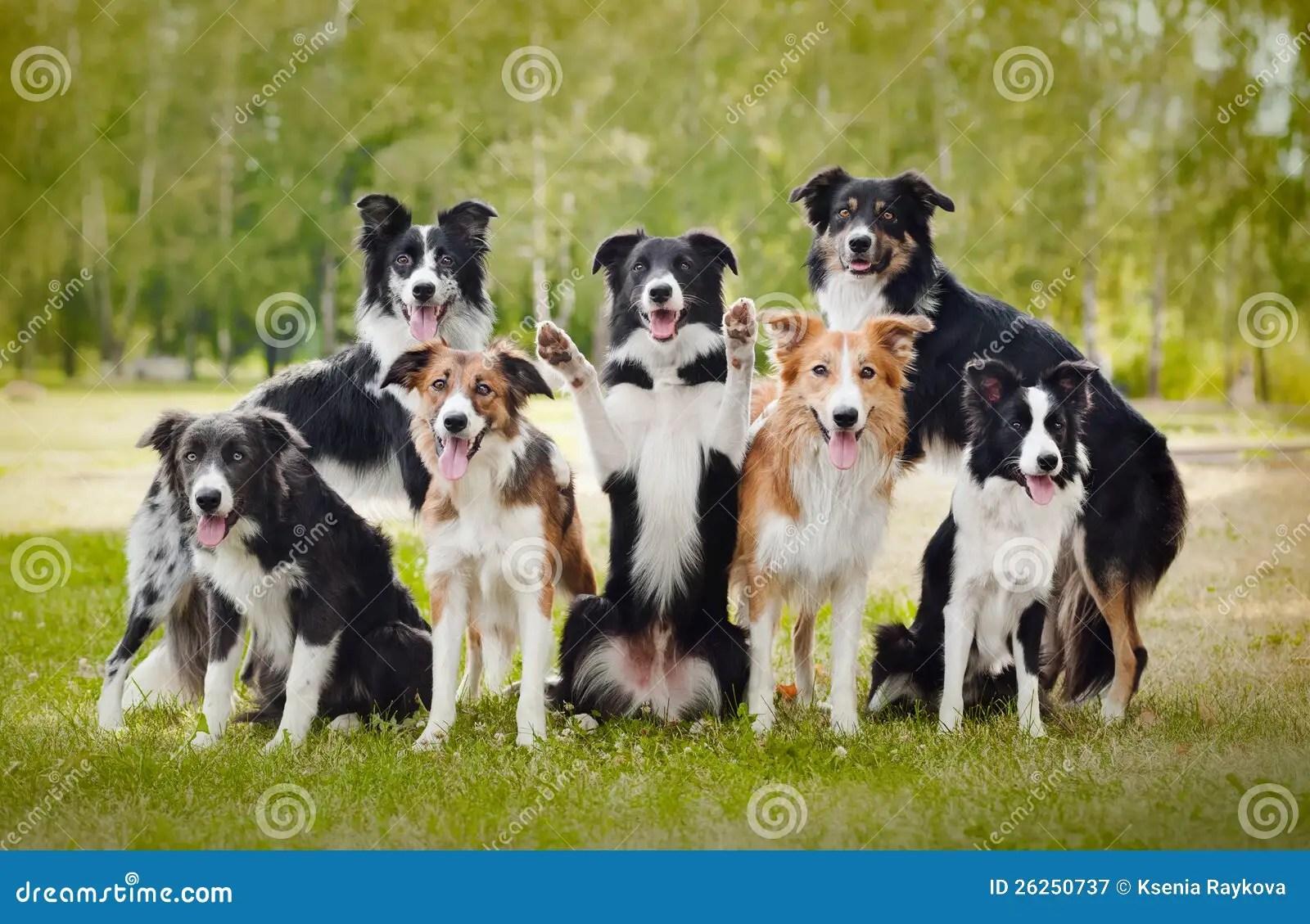 Cute Owl Wallpaper Border Group Of Happy Dogs Stock Image Image Of Medium Mammal