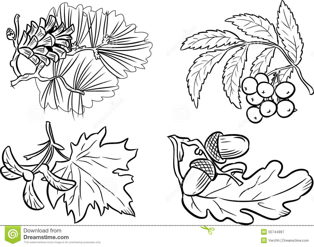 Group Of Plants Stock Vector Illustration Of Trees
