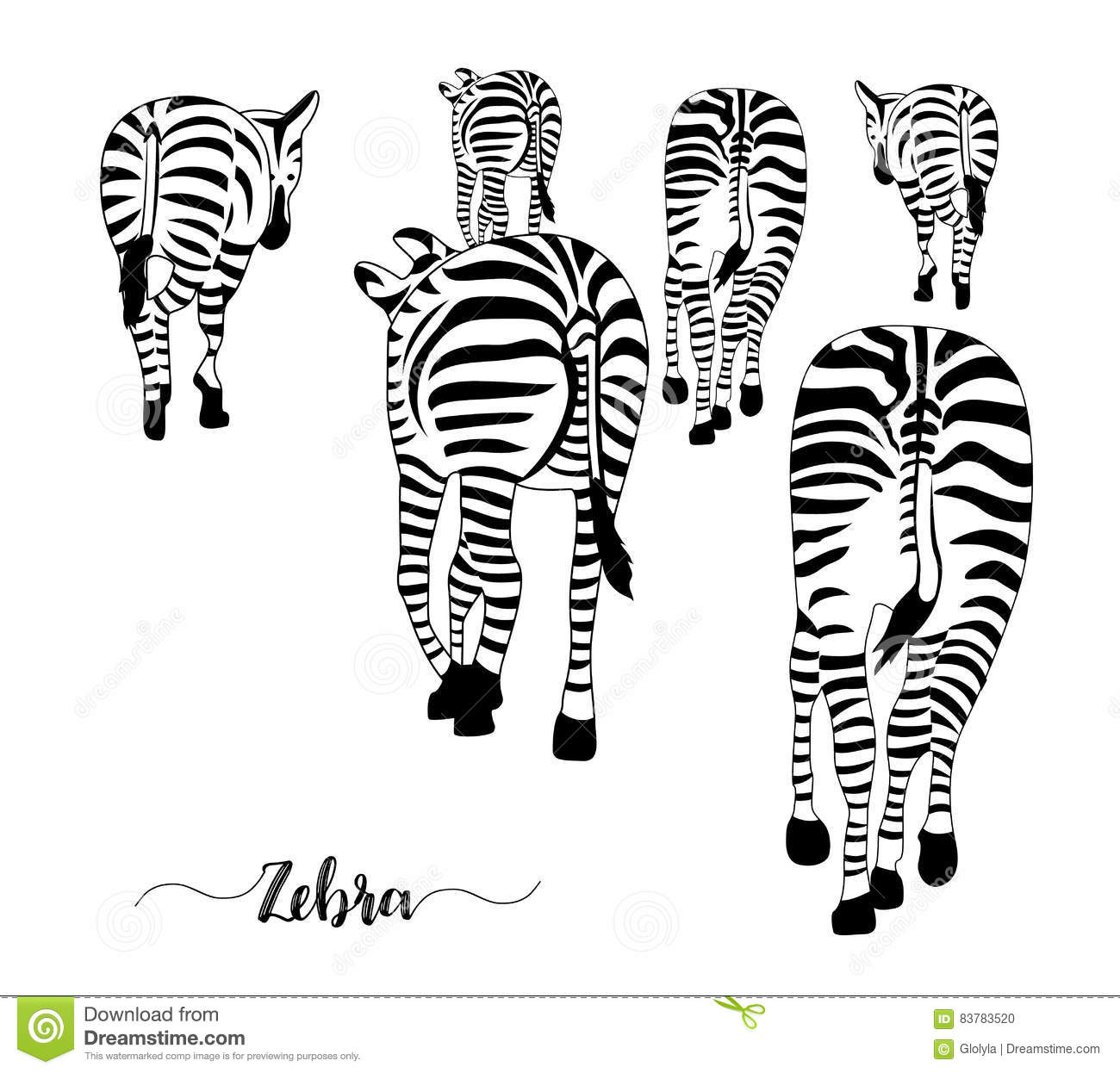 Group Zebras Stock Illustrations 21 Group Zebras Stock