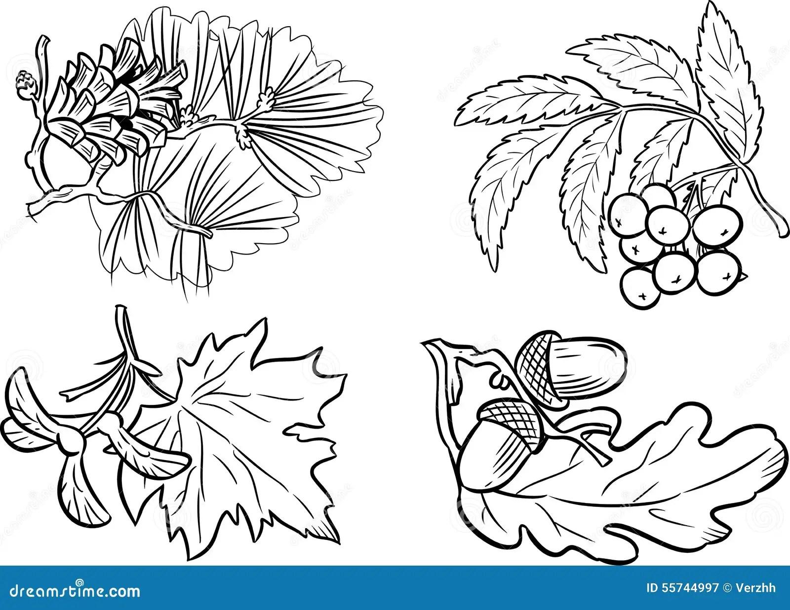 Grupa Ro Liny Ilustracja Wektor Ilustracja Z O Onej Z
