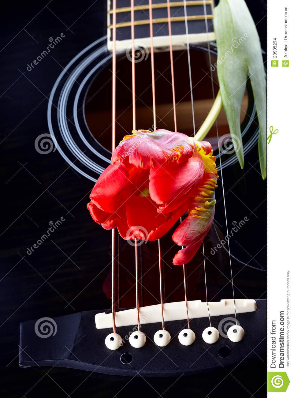 Guitar And Red Tulip Stock Images Image 29905294