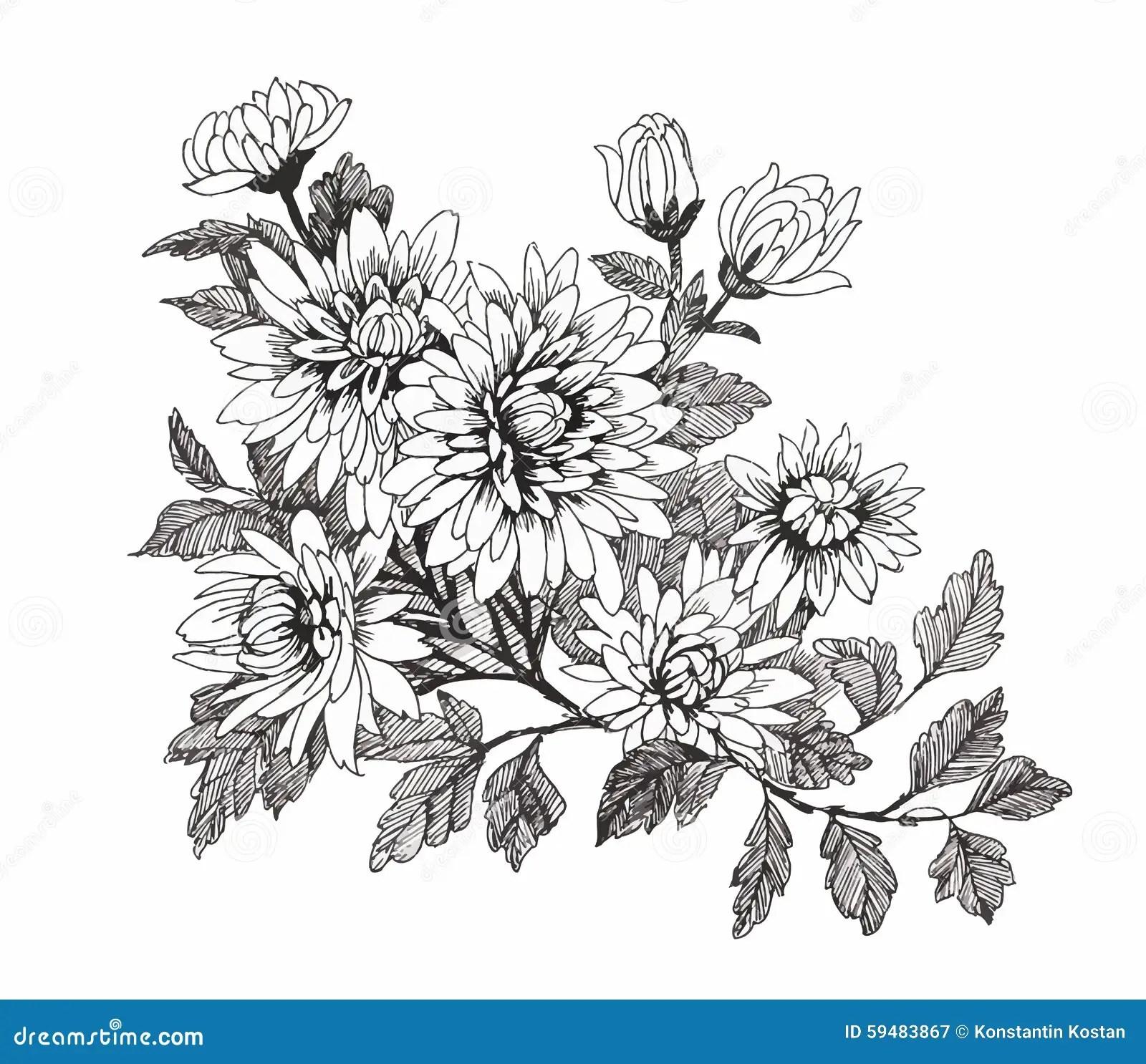 Harlig Monokrom Isolerad Svartvit Blomma Hand Drog