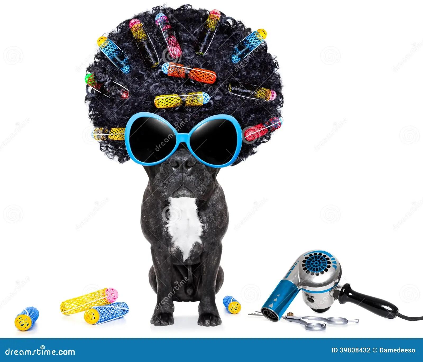 Hairdresser Dog Stock Photo Image 39808432