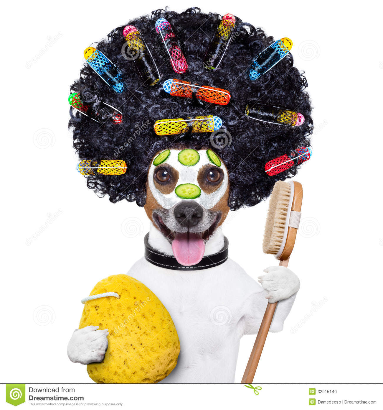 Hairdresser Dog With Curlers Stock Photo Image 32915140