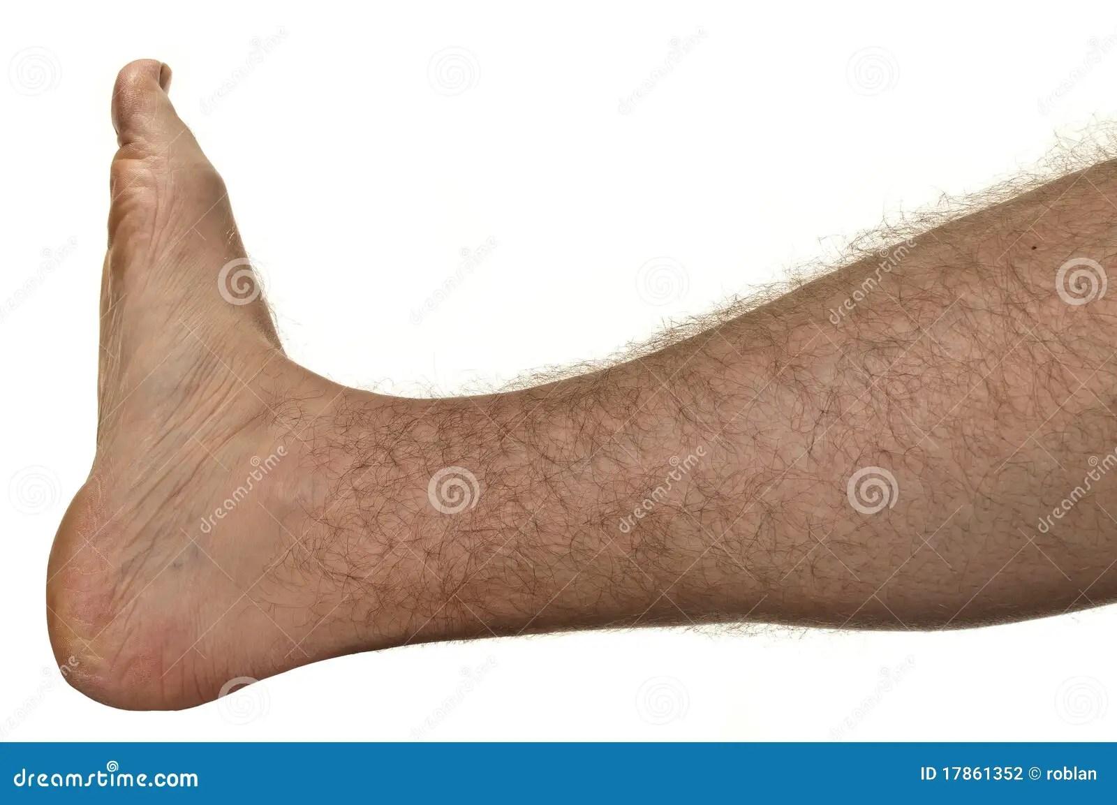 hairy leg stock photo