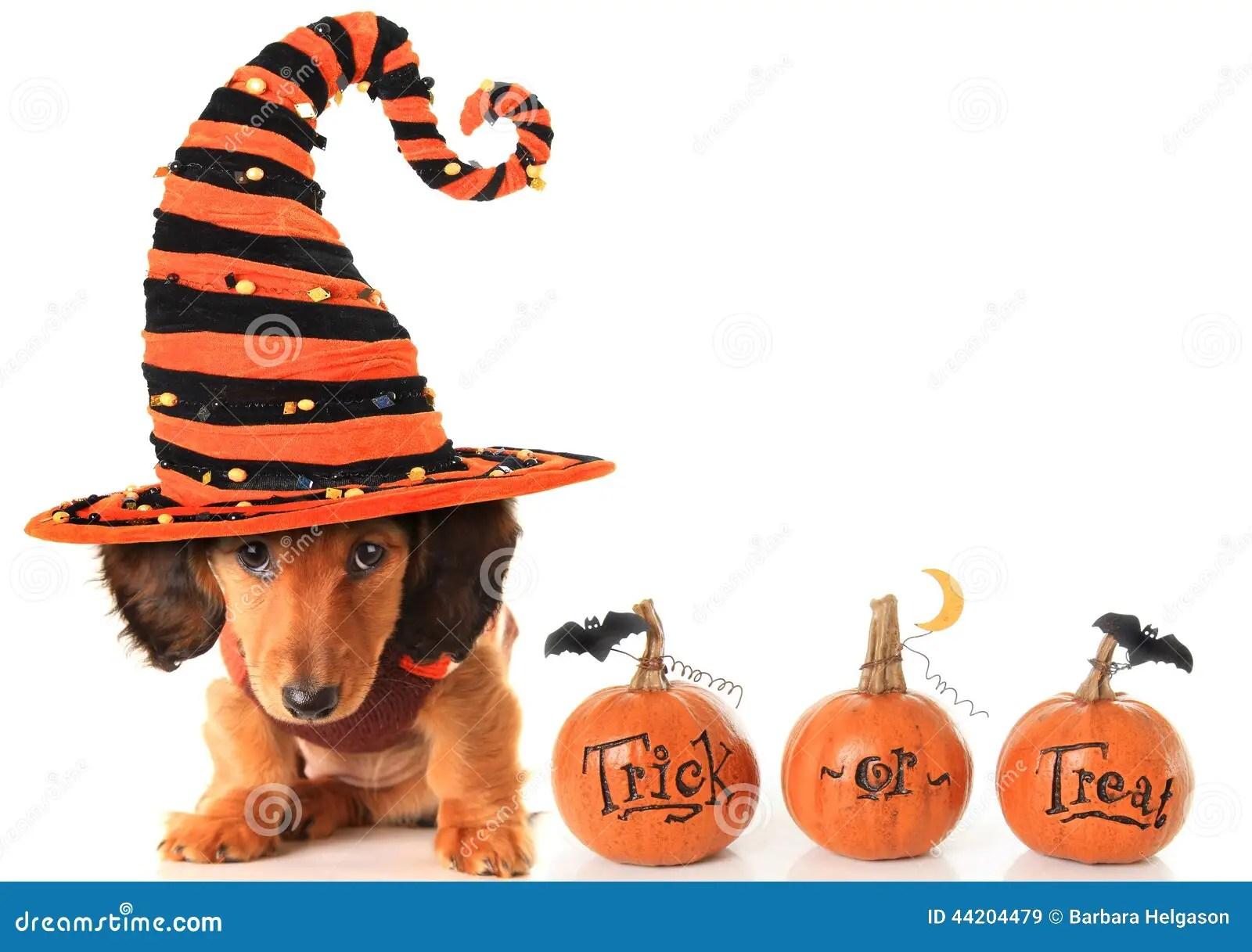 Halloween Puppy Stock Photo Image 44204479