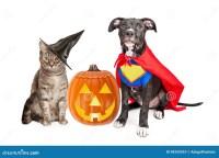 Halloween Puppy And Kitten With Pupmkin Stock Image ...