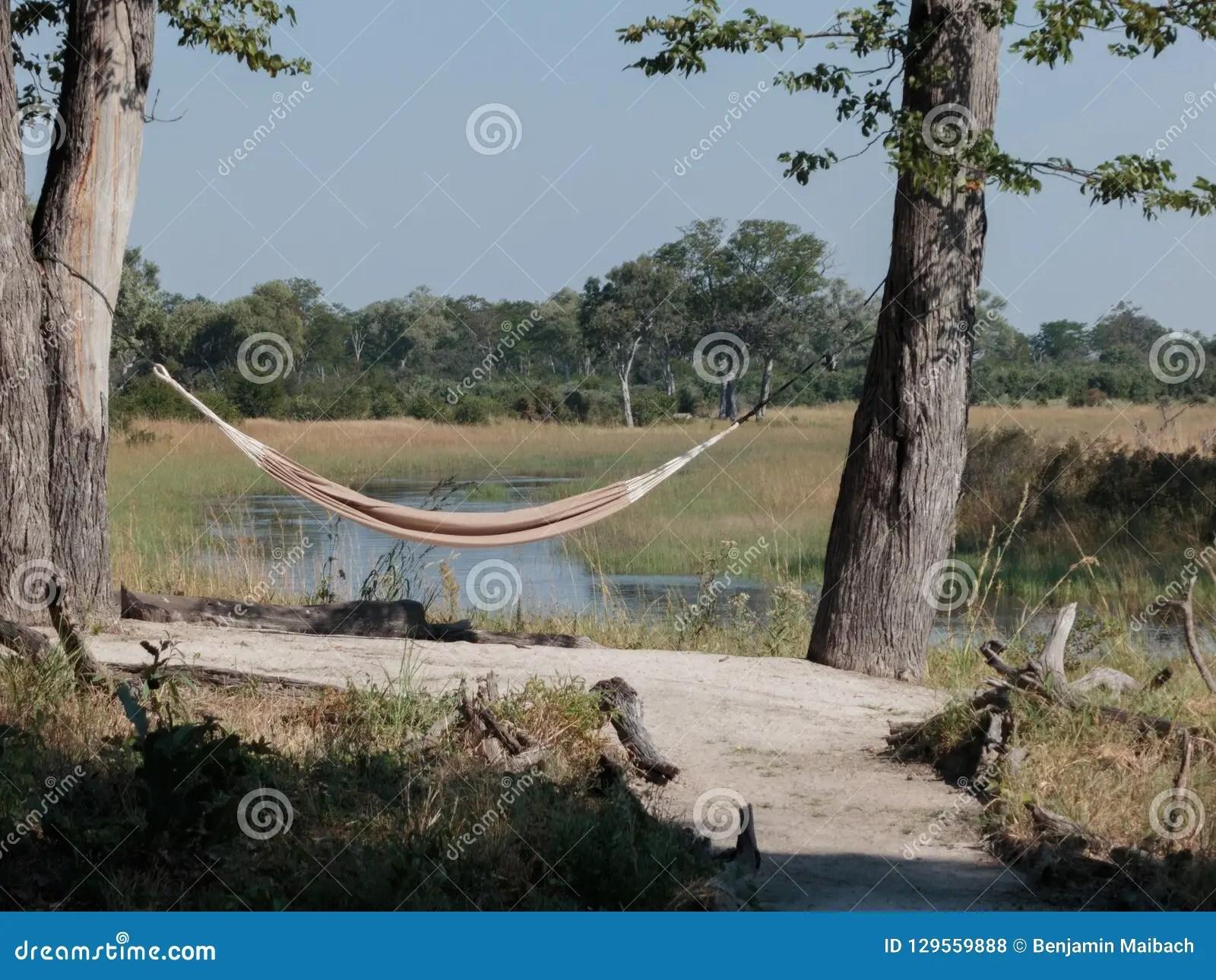 hammock between trees in