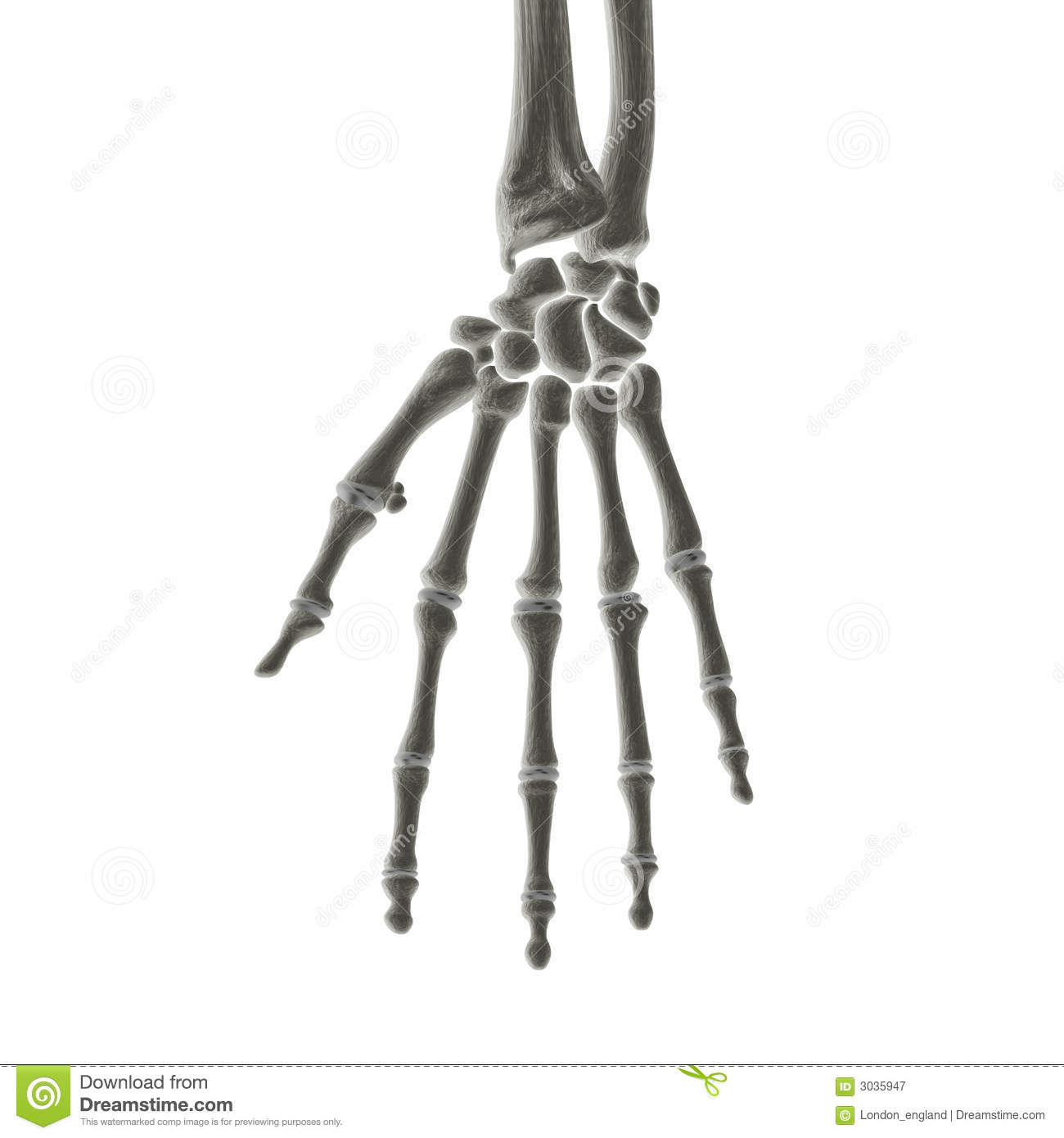 Hand Bones X Ray Royalty Free Stock Photography