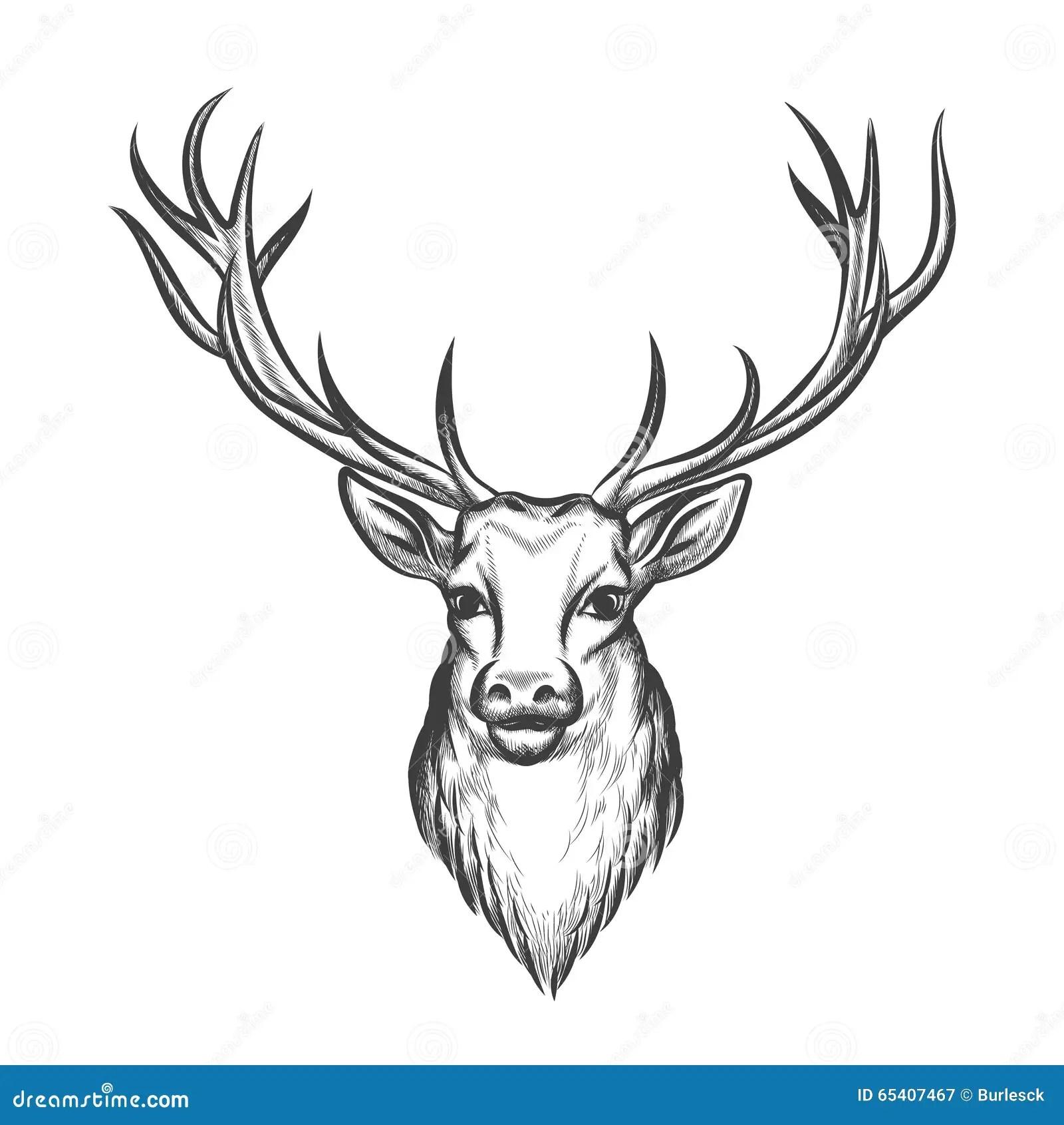 Hand Dragit Hjorthuvud Vektor Illustrationer Illustration