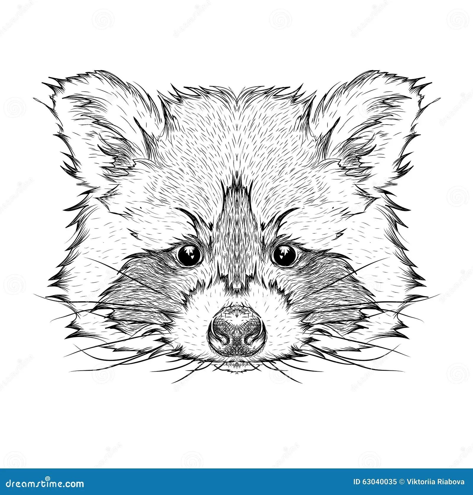 Hand Draw Raccoon Portrait Hand Draw Vector Illustration